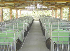 Pig pig conservation column equipment supply