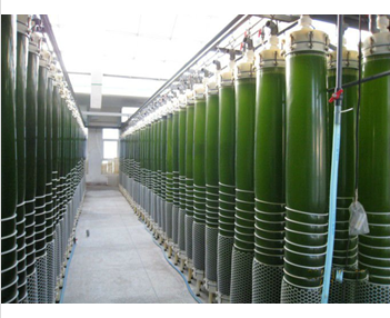 HXDSPJ commercial scale photobioreacters(PBR)
