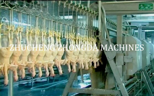 full Chicken Slaughter machine in China