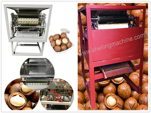 Macadamia Nut Cutting Machine