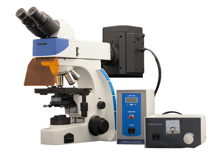 BF6000 Fluorescence Microscope is a Top Epi-fluorescence Instrument.