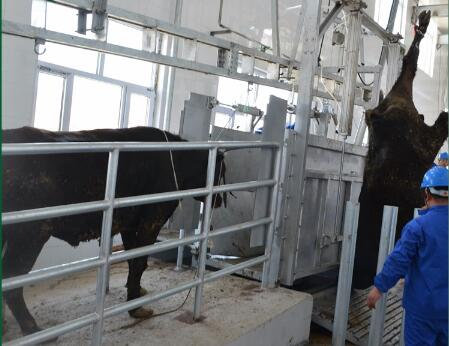 China Professional supplier Cattle Hide Pulling Equipment in Cattle Slaughter House