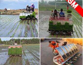 good price rode paddy rice transplanter / manual rice transplanter for sale