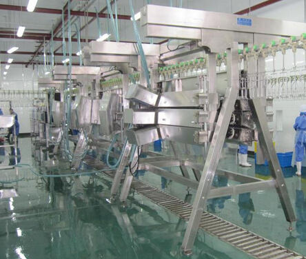 Chicken Automatic Plucking Machine