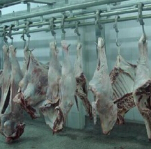 300 cattles per day meat processing equipment