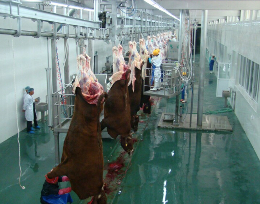 Halal Slaughtering Equipment Livestock of Cattle