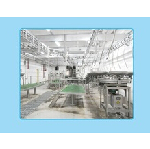 Pig Slaughter Equipment: Synchronous Sanitary Inspection