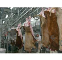 cattle slaughtering plant equipment