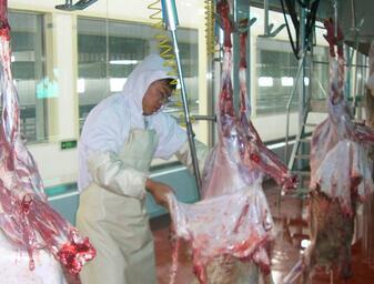 Halal Sheep Slaughter Machine For Slaughterhouse