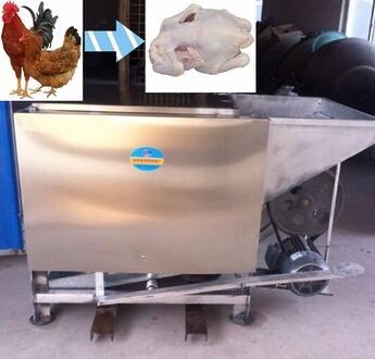 Chicken slaughtering equipment, chicken plucker machine