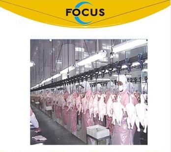 automatic chicken equipment 500 bph 1000 bph with over head convery line system